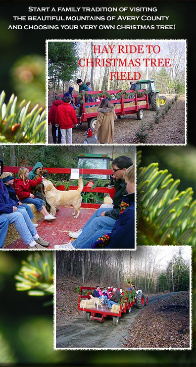 Christmas Tree Farm Raleigh Nc